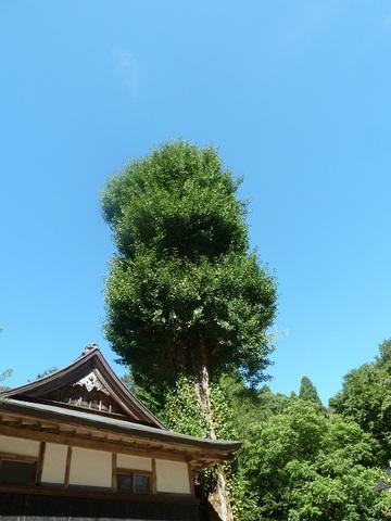 善住寺の風景
